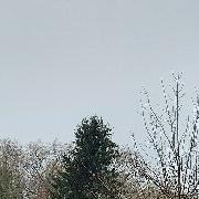 phocathumbl20201110113512
